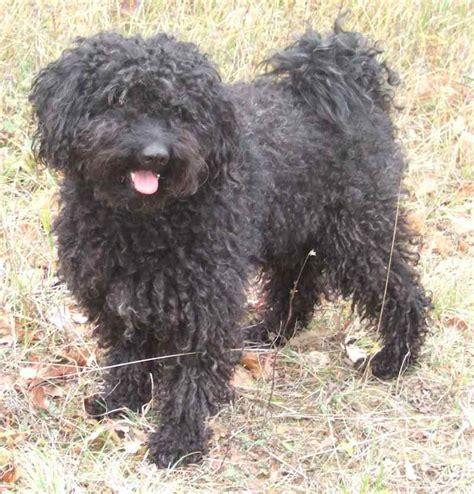 medium dog breeds list  medium medium large small