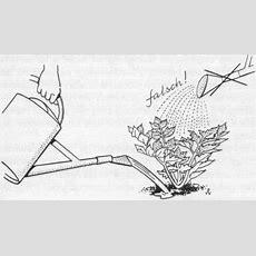 Knoliensellerie Muß Ständig Gehackt Und Gut Mit Wasser