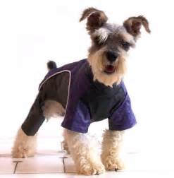 Puppies Dogs Wearing Clothes