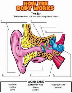 Activity  Ears
