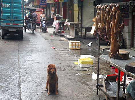 개고기를 먹는 나라