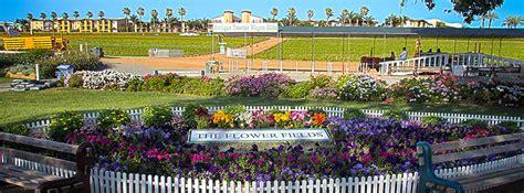 breathtaking flower farm hiding  southern california