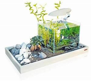 Aquarium Einrichten Anfänger : nano aquarium kaufen tipps vergleichstest aquarium ~ Lizthompson.info Haus und Dekorationen