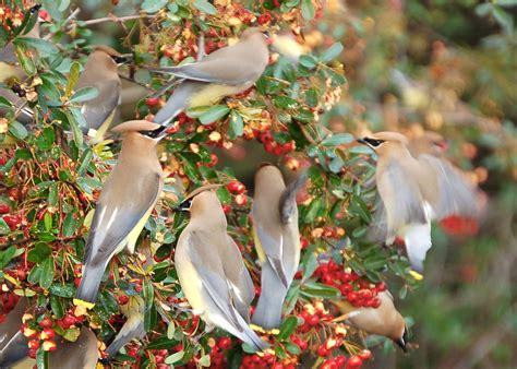 Bird Watching Writtenmyway