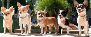 Beverly Hills Chihuahua 3 Puppies Names | www.pixshark.com ...