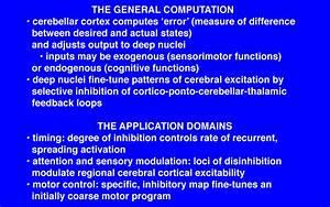 Functions Of The Cerebellum