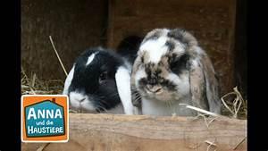 Haustiere Für Kinder : kaninchen reportage f r kinder anna und die haustiere youtube ~ Orissabook.com Haus und Dekorationen