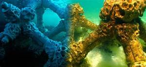 Modular Ceramic Structures Give Coral Reefs A Place To