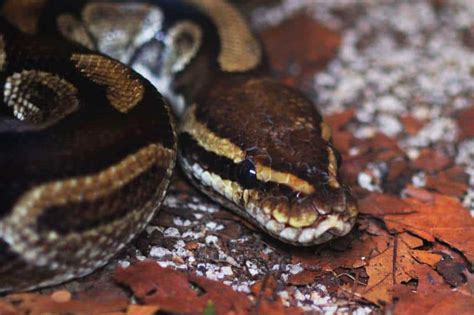 reptile zoo national reserved rights login ie