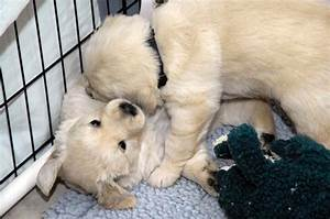 Finding comfort in training service dogs for other wounded ...