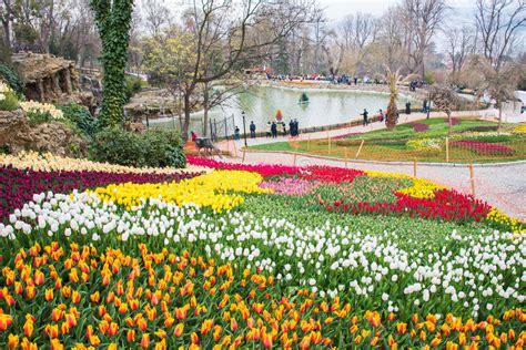 istanbul tulip festival in emirgan world famous tulip festival in emirgan park istanbul turkey flowering of tulips editorial