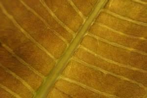 Schmucklilie überwintern Gelbe Blätter : schmucklilie berwintern was tun gegen gelbe bl tter agapanthus ~ Eleganceandgraceweddings.com Haus und Dekorationen