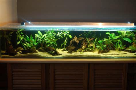 aquarium 30 litres images