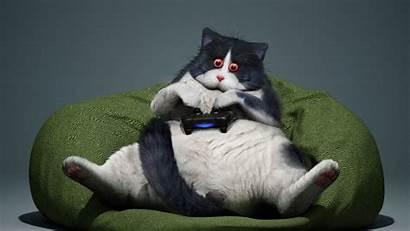 Funny Cat Gamer Cool Gamepad 1080p Laptop