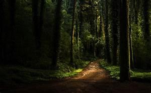 Forest, Path, Dark, Moss, Plants, Grass, Sunlight, Wallpapers, Hd, Desktop, And, Mobile, Backgrounds