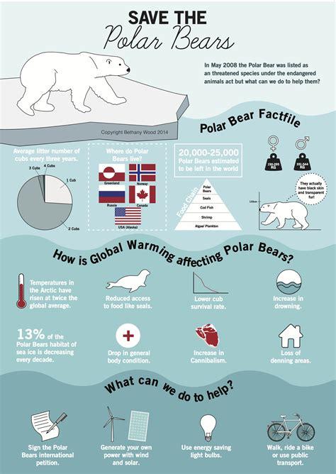 Save The Polar Bears Infographic Design Polar Bear
