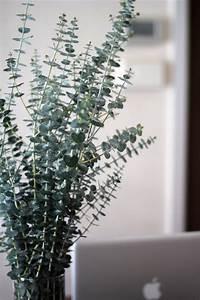 Eucalyptus Plante D Intérieur : wishful thinking eucalyptus love flowers ~ Melissatoandfro.com Idées de Décoration