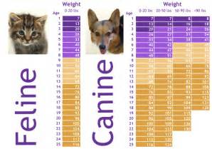 average cat weight by age age in pets beyond years pet nanny