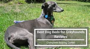 best dog beds for greyhounds reviews complete buying guide With best dog beds for greyhounds