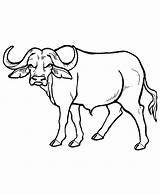 Buffalo Outline Coloring Cartoon Popular sketch template