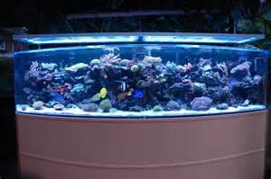 designer aquarien aquariums