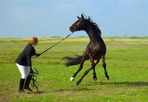horse training acting longe horses fearful fear fat line memes castle unpredictable excitable spring handling guide nutrition
