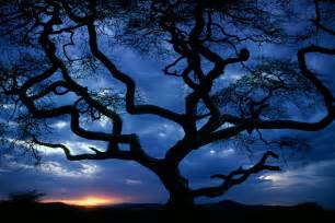tree at hd wallpapers 4397 amazing wallpaperz