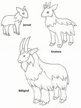 Gruff Goats Billy Three Coloring Printable Pages Activities Goat Colour Troll Clipart Deviantart Activity Clip Llama Library Drawings Pdf Via sketch template