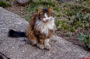 what to do with a stray cat a beautiful stray cat cats hq free pictures of
