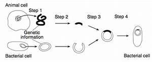 Le Hw3 8 Genetic Engineering