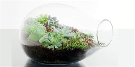 สวนขวดแก้ว การจัดสวนในพื้นที่จำกัด - เรียลเมโทร
