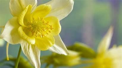 Daffodils Flower Summer Screensavers Flowers Daffodil Pretty