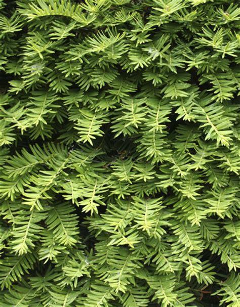 tuin zonder giftige planten giftige planten en bloemen in uw tuin 218 w hoveniers