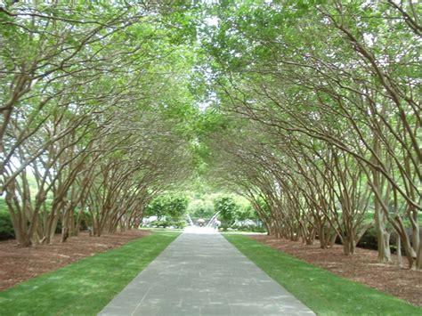 botanical gardens dallas spusht dallas arboretum botanical gardens