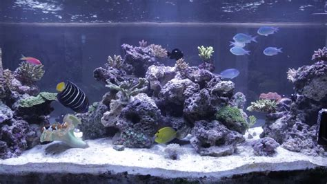 Saltwater Aquarium Aquascape by Reef Tank Aquascape
