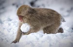 Tiere Im Schnee tiere im winter hintergrundbilder hd