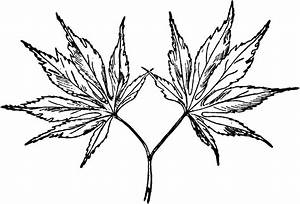 Japanese Maple ClipArt ETC