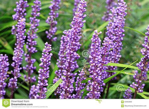 bloemen namen van a tot z