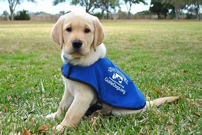 Dogs Guide Southeastern Puppy