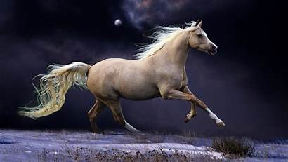 Arabian Horse Mobile