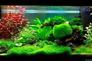Co2 Rechner Aquarium : aquarium 2014 flowgrow aquascape aquarium database ~ A.2002-acura-tl-radio.info Haus und Dekorationen