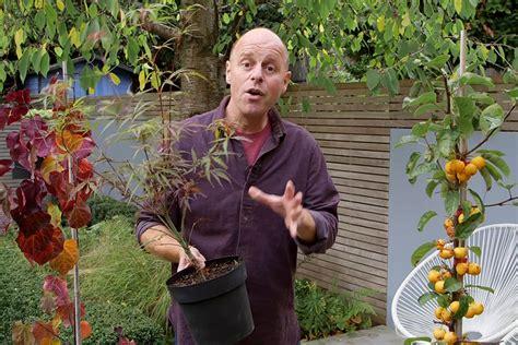 choosing trees  small gardens gardenersworldcom