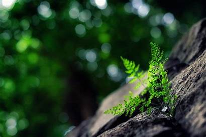 Plants Plant Close Nature Leaf Tree Bokeh
