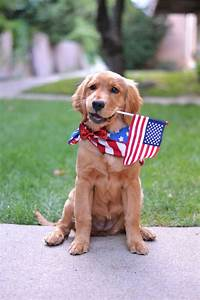 Patriotic Puppy - He and Me