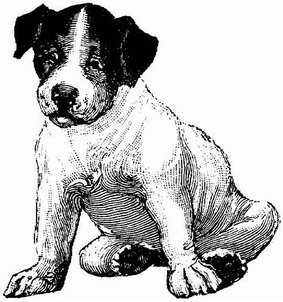 Coloring Pages Dog Puppy Beagle Pound Breed