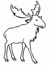 Elk Coloring Moose Pages Outline Animal Bull Drawing Printable Clip Deer Draw Simple Cliparts Template Easy Getdrawings Para Colorir Head sketch template