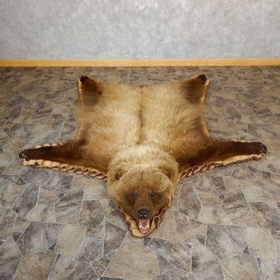 Skin Rug Taxidermy Cost by Grizzly Size Rug Mount For Sale 19261 The
