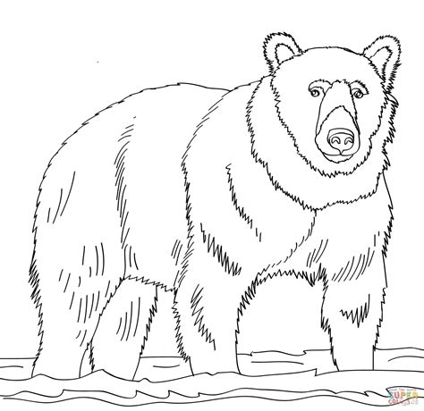brown bear coloring pages   print