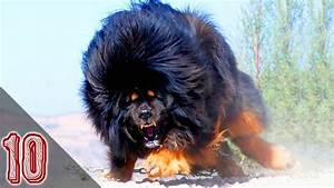 I 10 Cani Pi U00f9 Pericolosi Al Mondo  1