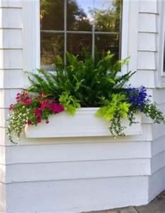 Blumenkästen Bepflanzen Sonnig : awesome plant combinations for window boxes 49 g rten ~ Orissabook.com Haus und Dekorationen